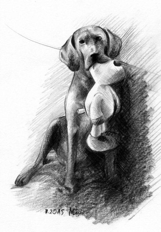 Pies z zabawką rysunek ołówek