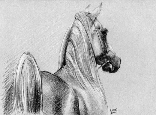 Arab rysunek ołówek