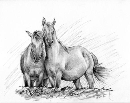 Rysunek ołówkiem, dwa konie przytulone do siebie bokami.