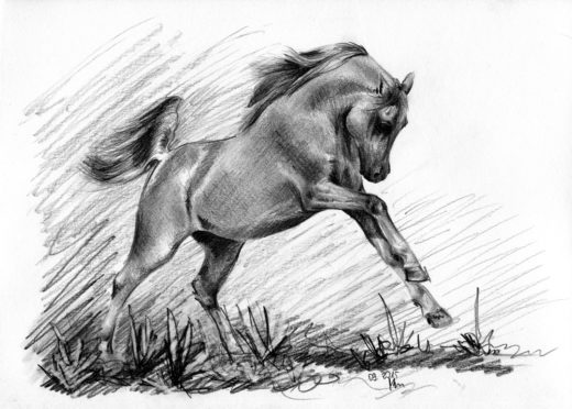 Rysunek ołówkiem, koń arabski w galopie