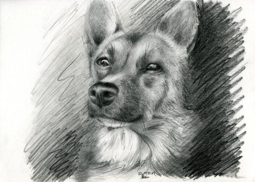Pies rysunek ołówek