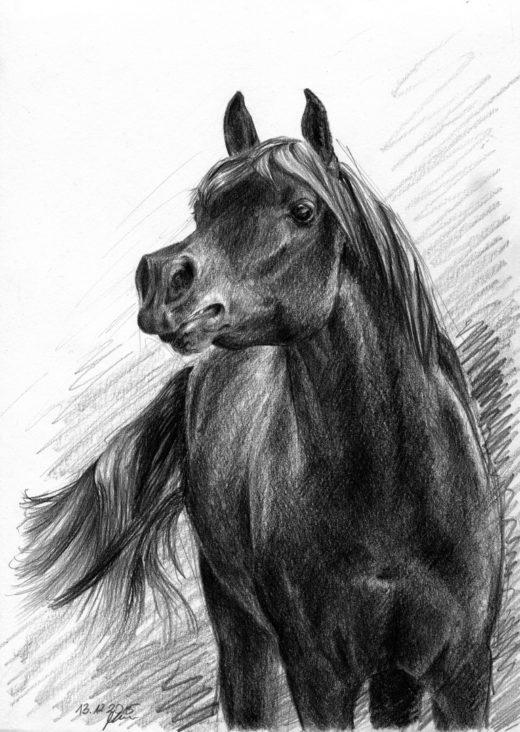 Rysunek ołókiem, rżący koń