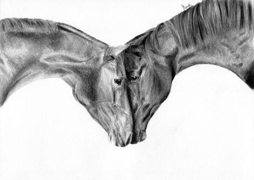 Dwa konie dotykające się nosami