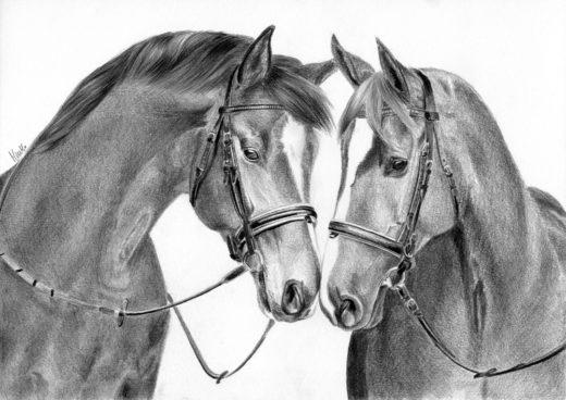 Dwa konie, dotykające się nosami.