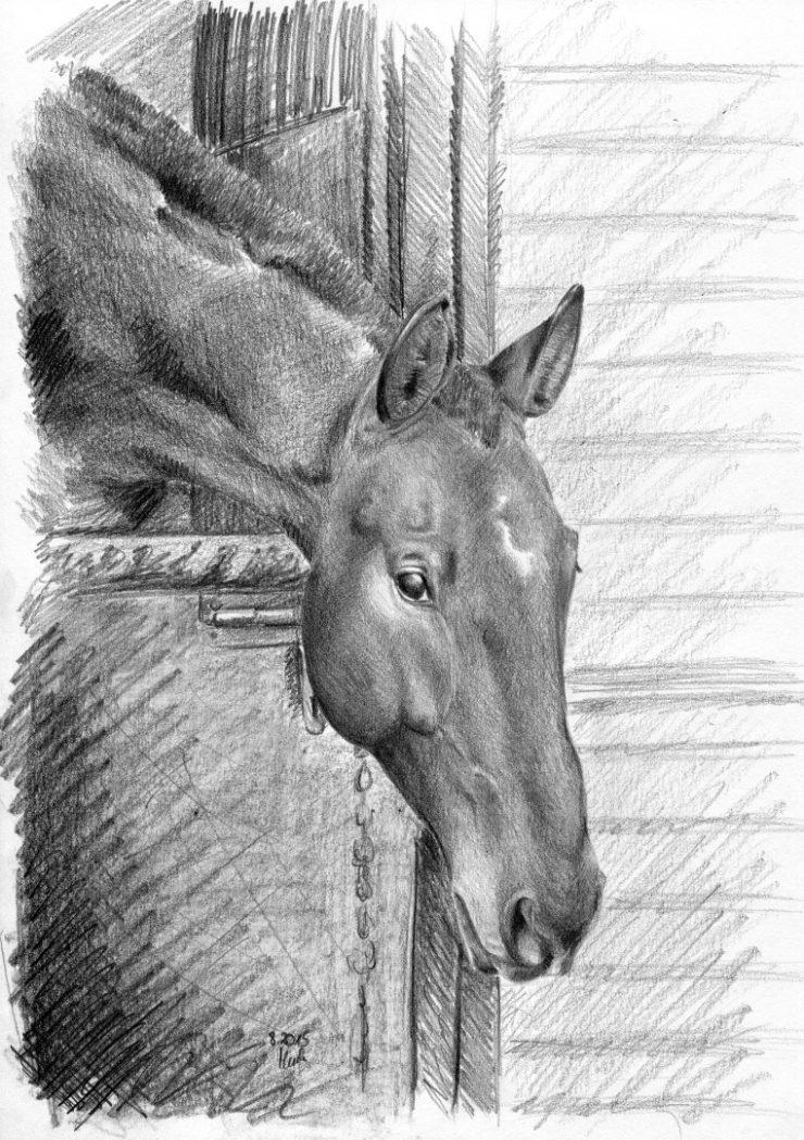 Rysunek ołówkiem, koń wychylający się z boksu