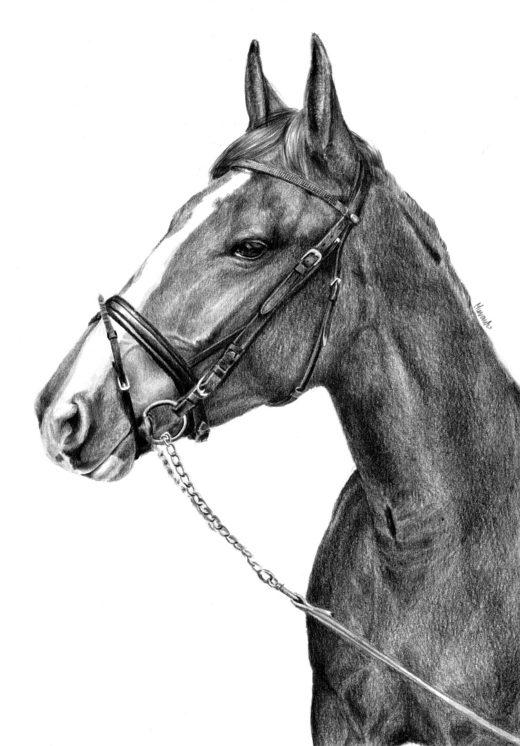 Rysunkek konia w tranzelce