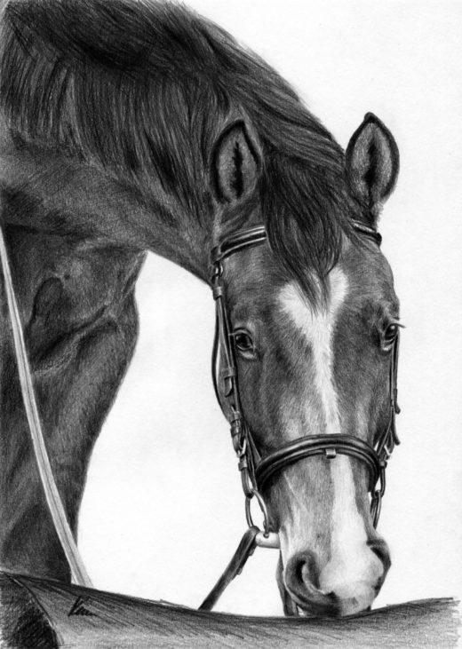 Koń z długą, zimową sierścią