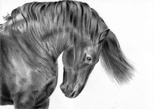 Rysunek konia z pochyloną głową