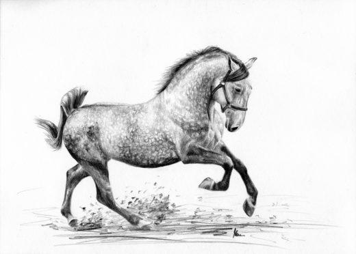 Siwy koń w galopie