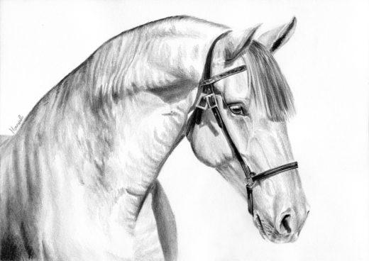 Rysunek siwego konia