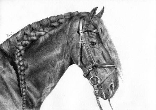 Głowa konia z zaplecioną grzywą.
