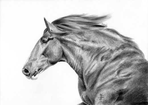 Rysunek konia z garbonosym profilem.