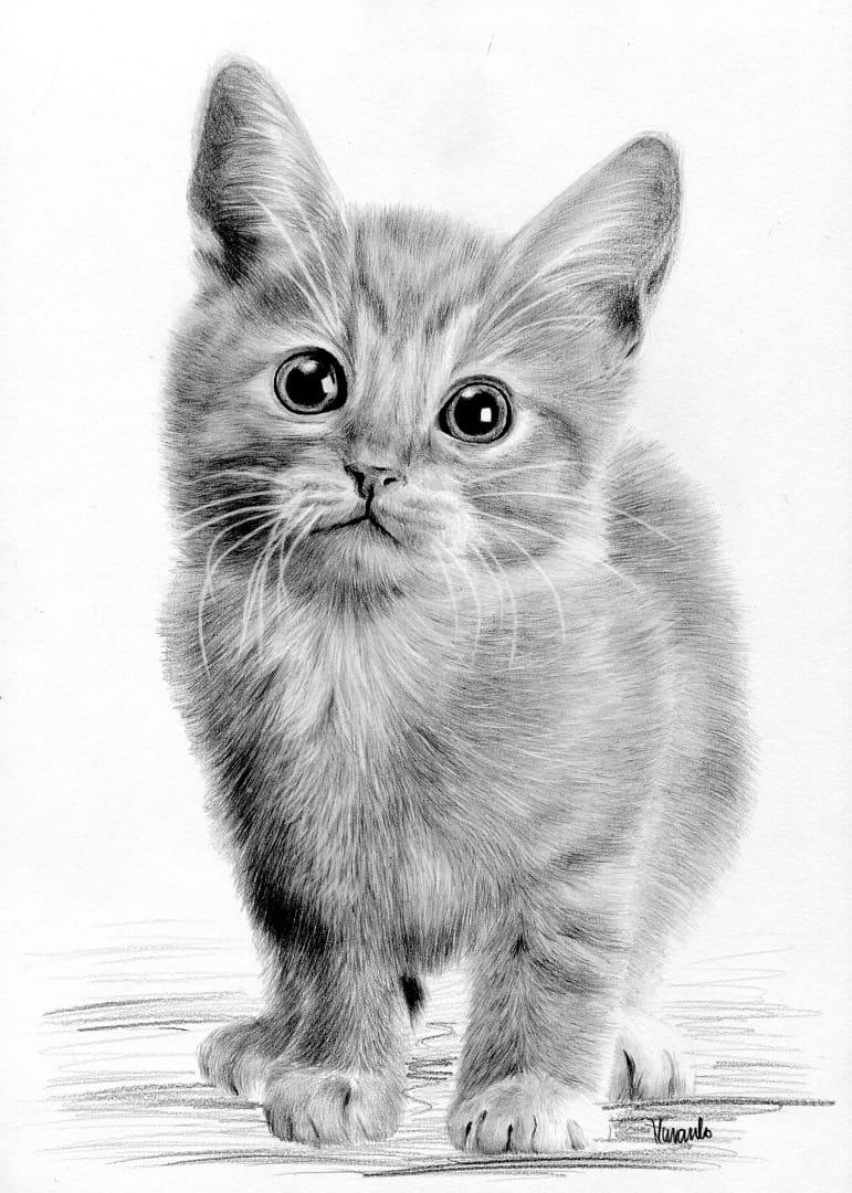 Znalezione obrazy dla zapytania kotek