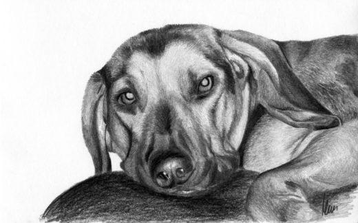 Rysunek leżącego psa.