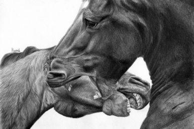 Głowy dwoch gryzacych sie koni