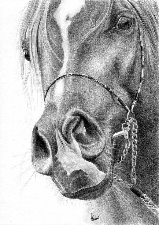 Rysunek konia z rozdetymi chrapami