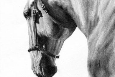 Koń z odświętnie zaplecioną grzywą.