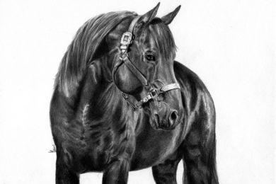 Rysunek karego konia.