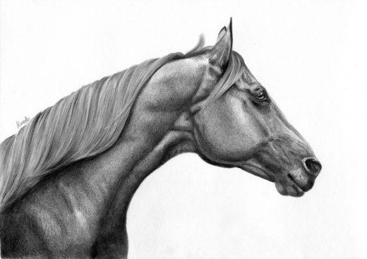 Koński łeb z profilu.