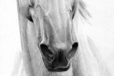 Rysunek konia z rozdetymi chrapami.
