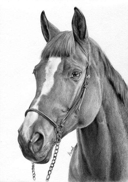 Portret konia o imieniu Lombard.