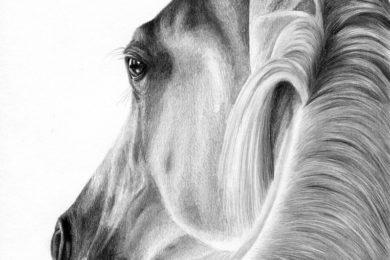 Ciekawy kadr na portet konia.