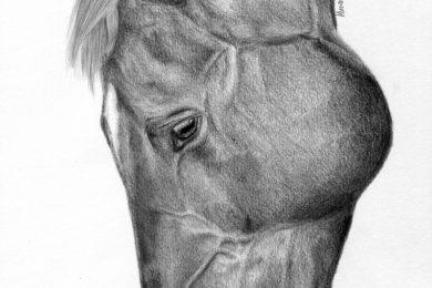 Anatomiczny portret konia.