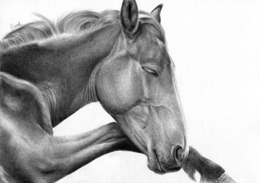 Rysunek śpiącego konia.