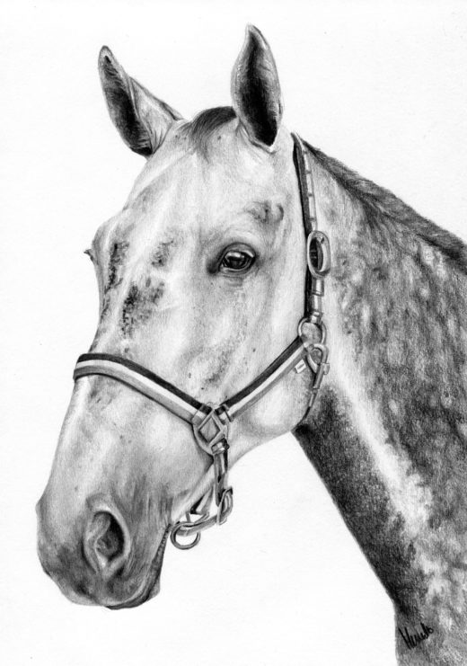 Portret siwego konia