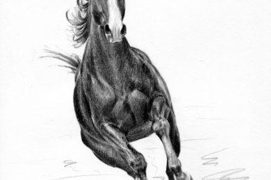 Rysunek konia w galopie