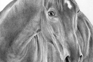Rysunek konia ze sterczącą grzywą
