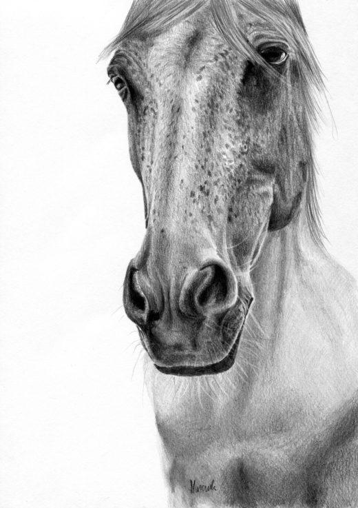 Rysunek siwego konia z hreczką.
