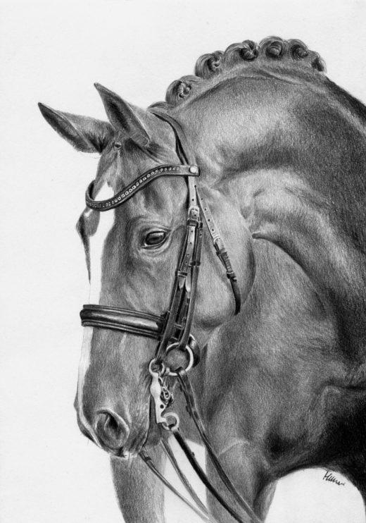 Portret konia w munsztuku.