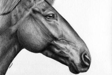 Portret konia, w stylu rzeźby rzymskiej.