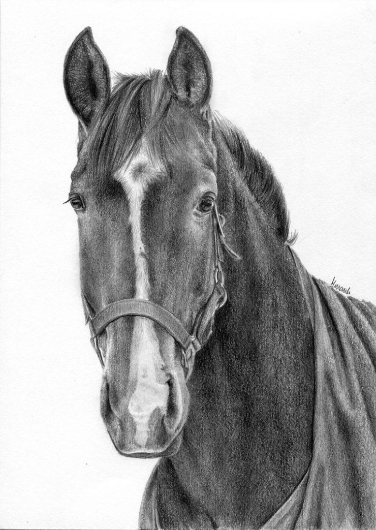 Portret konia w zimowej derce.