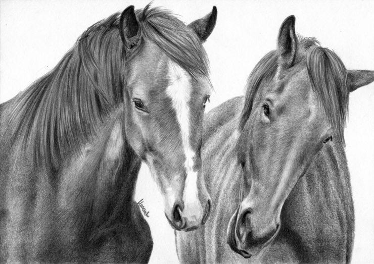 Rysunek koni z długą, zimową sierścią.