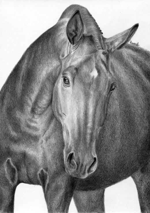 Rysunek konia en face, wykonany ołówkiem.