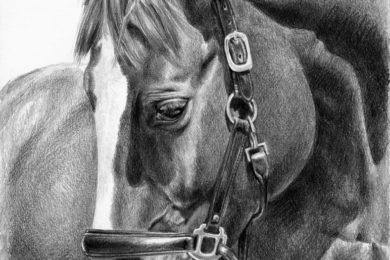 Portret konia wykonany ołówkiem.