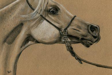 Rysunek arabskiej klaczy Emira.