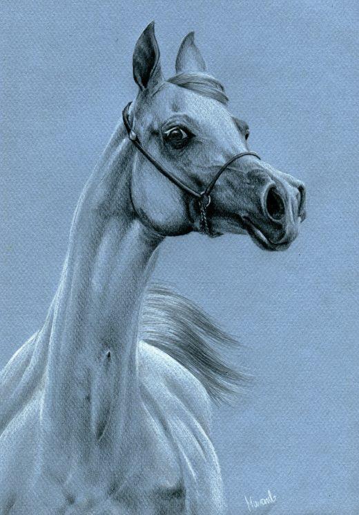 Rysunek siwego koia arabskiego