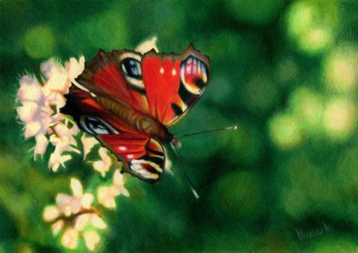 Rysunek kredką motyla na kwiecie oregano.