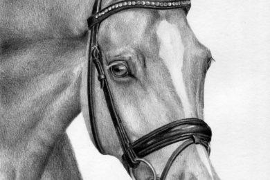 Portret konia z zaplecioną grzywką.