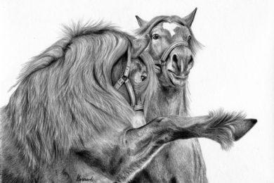 Zimnokrwiste konie w czasie walki.