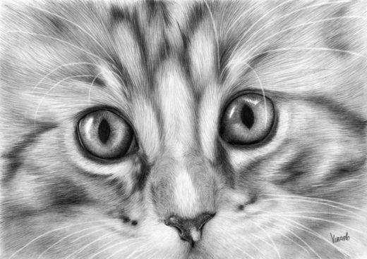 Rysunek pyszczka kotka.