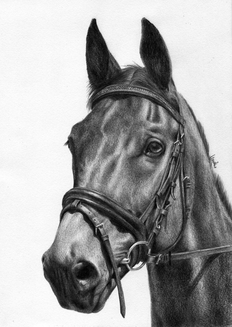 Portret konia narysowany ołówkiem