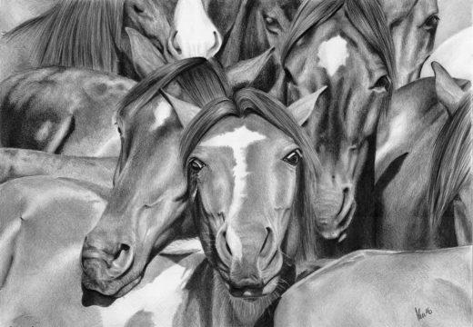 Rysunek stada koni