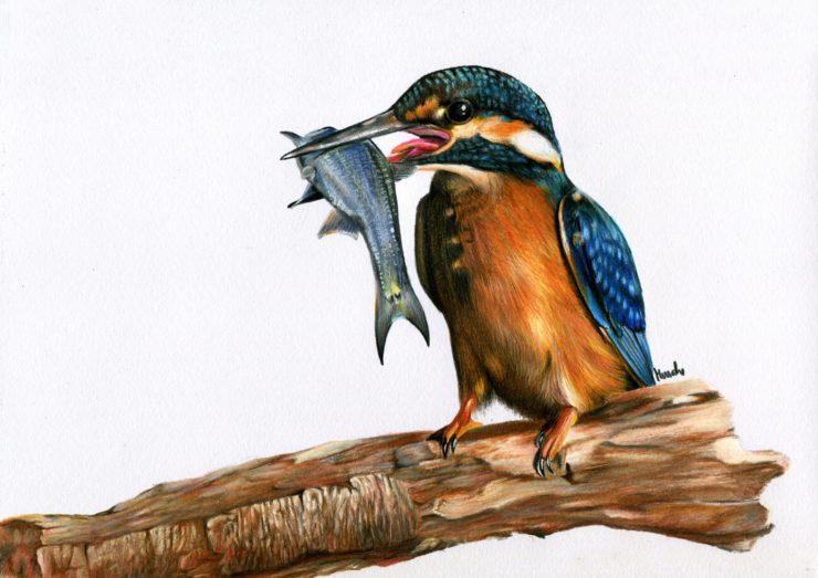Rysunek zimorodka z rybą w dziobie.