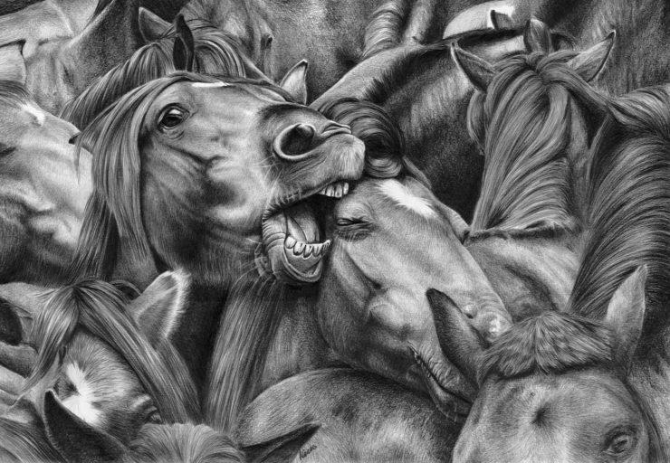 Gryzące się konie na tle stada, rysunek ołówkiem.