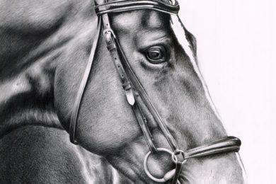 Portret konia w ogłowiu.