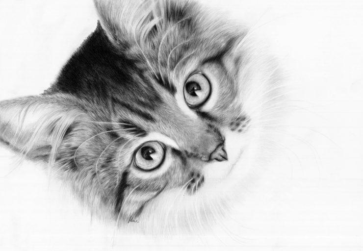 Rysunek kota hipnotyzującego.